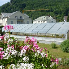Blumen Iten u. Co. in Bad Ragaz